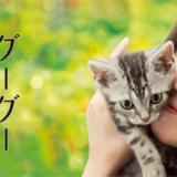 映画『グーグーだって猫である』あらすじ・ネタバレ感想!猫好きは必見!愛猫との切なく温かいエッセイ風作品
