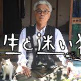 映画『先生と迷い猫』あらすじ・ネタバレ感想!