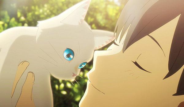 『泣きたい私は猫をかぶる』