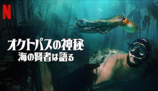 映画『オクトパスの神秘:海の賢者は語る』あらすじ・ネタバレ感想!アカデミー長編ドキュメンタリー賞受賞!男性とタコの交流描く物語