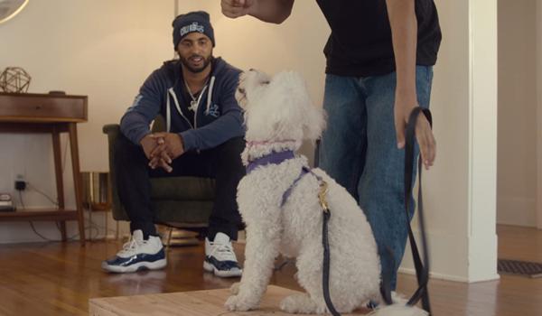 『CALI K9:どんな犬でもしつけます』