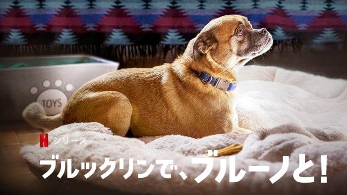 海外ドラマ『ブルックリンで、ブルーノと!』あらすじ・ネタバレ感想!パグルのブルーノが大好きすぎる飼い主マルコムの物語