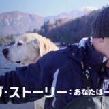 『ドッグ・ストーリー:あなたは一番の友達』あらすじ・感想!犬への想いに人生を紡ぐ人間の物語